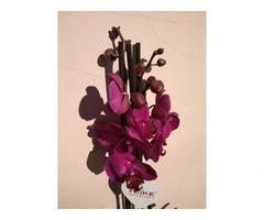 Орхідея. Фаленопсіс на 3 стовбури - Фото 4/4