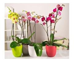 Продаю орхидеи