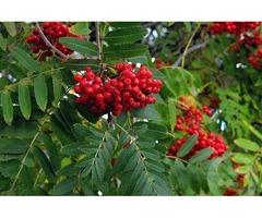 Плодоносящие и декоративные кусты и деревья