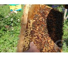 Мёд с личной пасеки