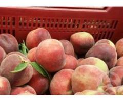 Реалізуємо персики з Іспанії