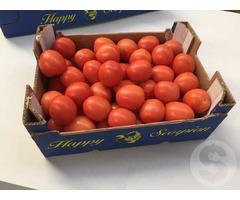 Продам помидор из Испании