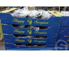 Продам баклажан из Испании