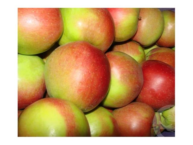 Продам яблоки лиголь оптом от 100 кг - 1/1