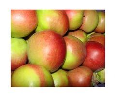 Продам яблоки лиголь оптом от 100 кг