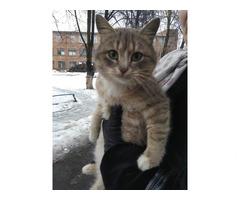 Кошка трехмастная